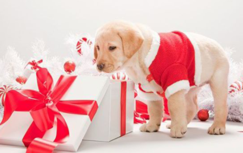 15 Gifts for Dog Lovers