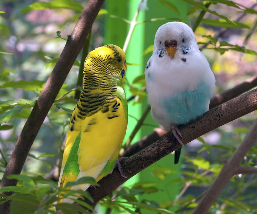 Pros+and+Cons+of+Being+a+Bird+Owner